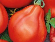 томат японский трюфель отзывы