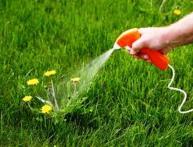 борьба с сорняками