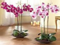 орхидеи уход