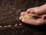 посев семян газонной травы