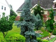 как сажать елку