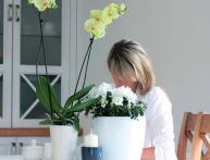 умный горшок для цветов с автополивом