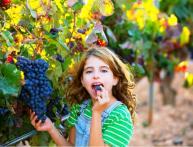 виноград альфа характеристика сорта