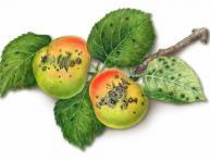 Болезнь яблони