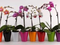 Размножать орхидею cnjbn!