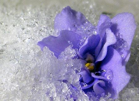 fiaka-zima