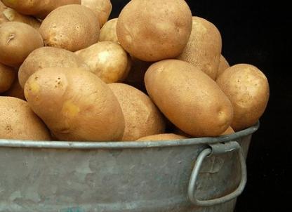 Выращивание картофеля. Елизавета