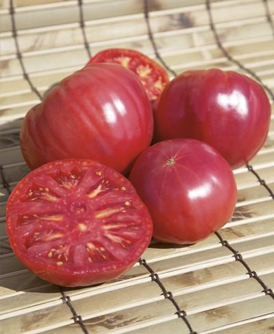 Лучшие гибридные сорта -  томат Торбей F1