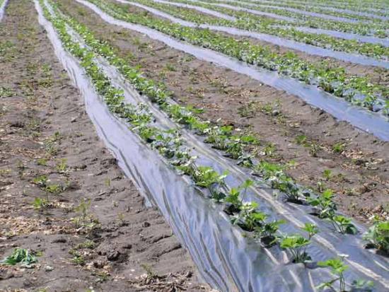 Посев овощных культур.  Способы посева и посадки.