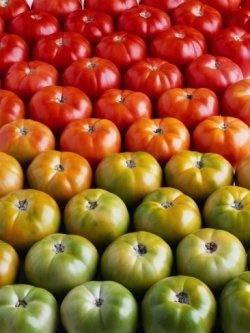 Уход за томатами в теплице: поливаем-опыляем