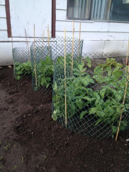 как высаживать картофель