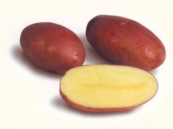 картофель Розара