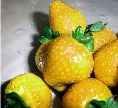 жёлтая клубника