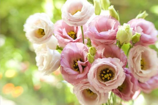 эустома, травяная роза