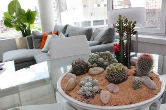 Как поливать кактусы в домашних условиях, особенности ухода