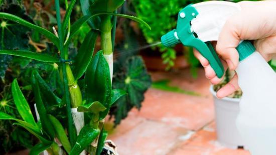 полив оцветущей орхидеирхидеи