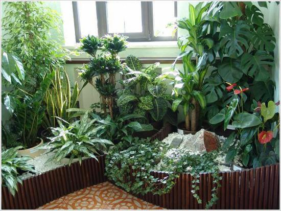 Теневыносливые комнатные цветы, названия и фото, их виды и преимущества