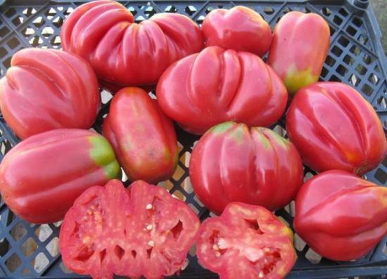 сорт томатов инжир розовый