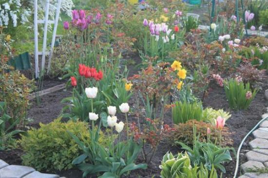 клумба после цветения тюльпанов