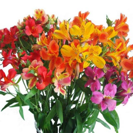 Альстромерия - значение цветка в букете