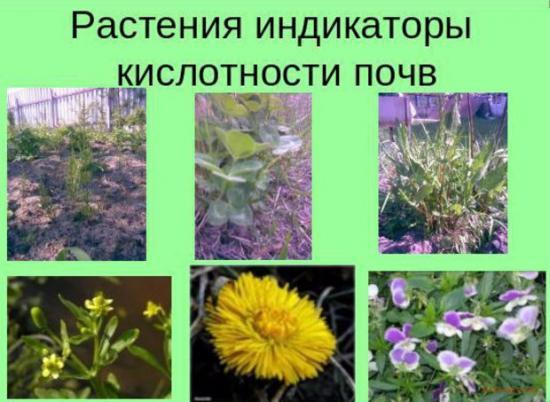 кислотность почвы определяют по сорнякам