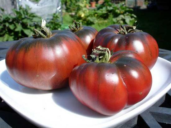 томаты Углерод