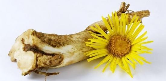 коренть и цветы девясила