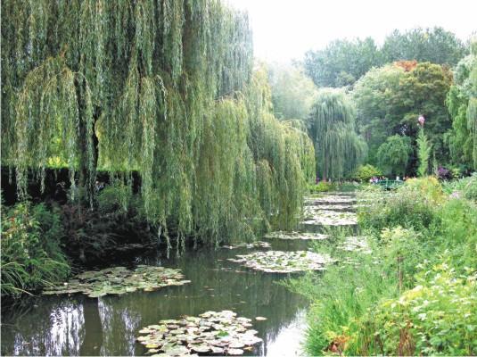 Какие деревья посадить на участке, от посадки каких лучше отказаться