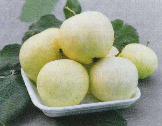 сорт яблок белый налив