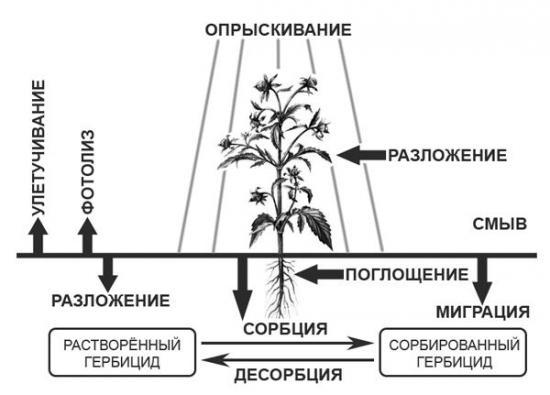 механизм действия гербицида