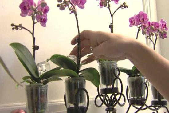 почему не растут комнатные цветы