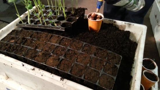 выращивание дождевых червей в домашних условиях