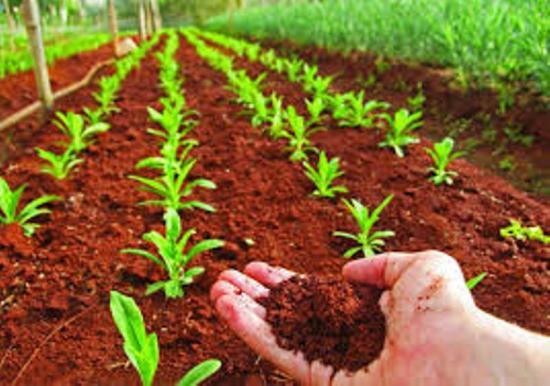 улучшение качества почвы