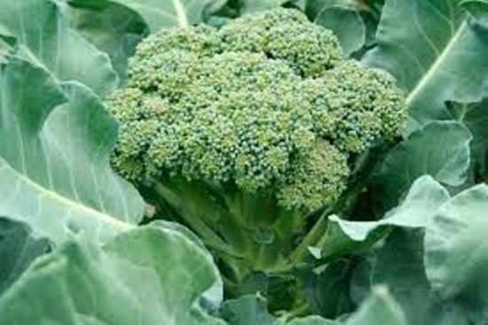 Отличие брокколи от цветной капусты и что общего у этих растений