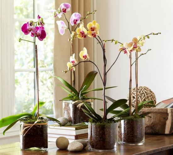 орхидеи любят хорошее освещение