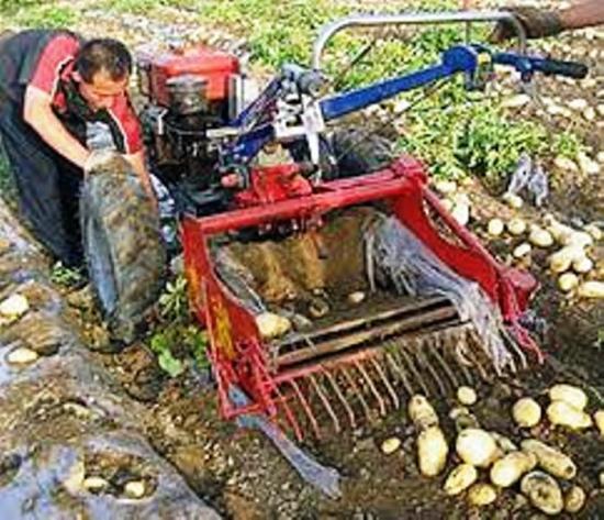 уборка урожая при помощи мотоблока