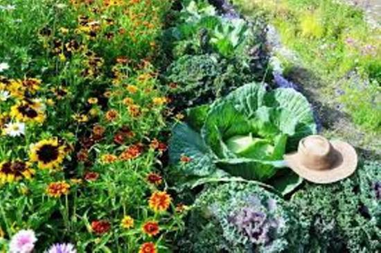 овощные культуры семена