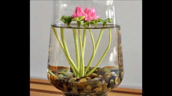 выращивание лотоса в квартире