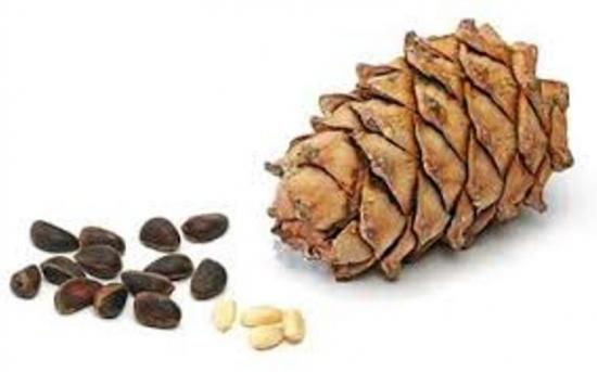 сосновые орешки