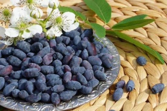 жимлолость  - источник витаминов