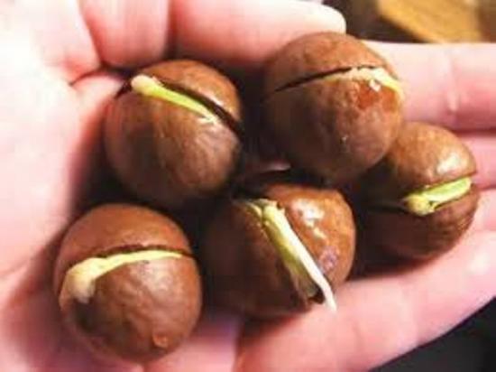 пророщенные орехи