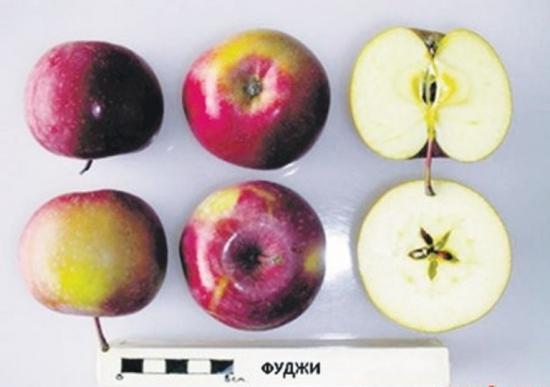 яблоко фуджи в разрезе