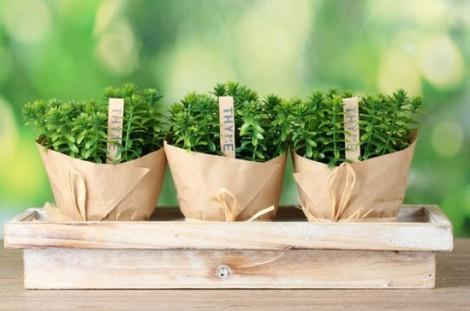горшки для выращивания пряных трав