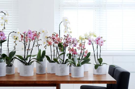 прозрачные горшки для орхидеи