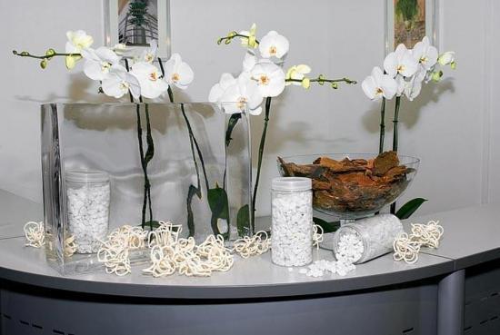 размер горшков для орхидеи