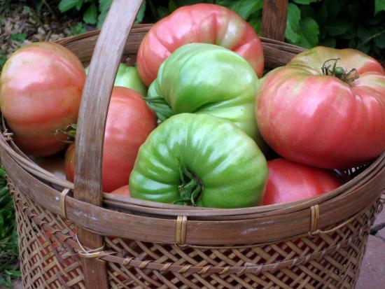 спелые и зеленые томаты, как сделать томаты краными