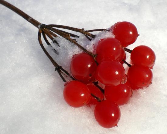 заморозка калины
