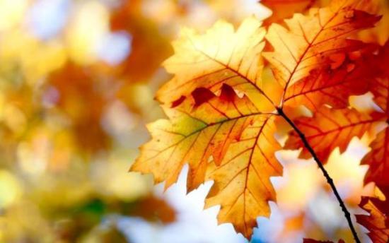 компост из листьев дуба и грецкого ореха