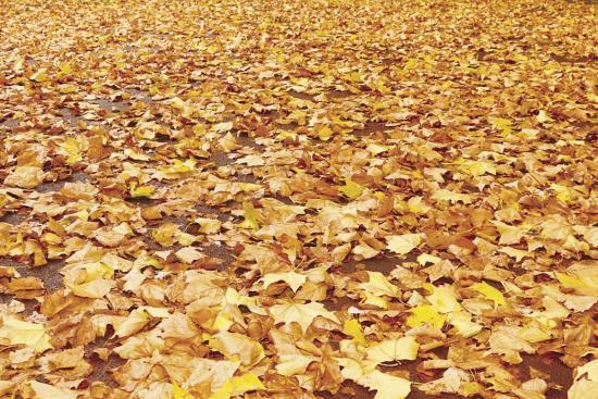 осень - время закладывания уомпоста из листьев