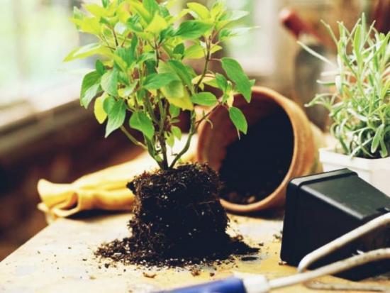 персадка растений
